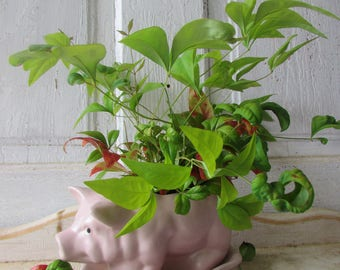 Dusty pink PIG planter mid century
