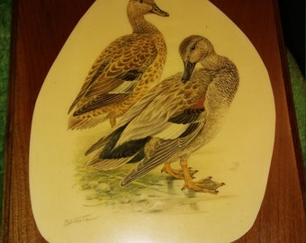 "Vintage R Schotz Mallard Duck Print Wood Plaque 11"" x 8 7/8 "" 1960's"