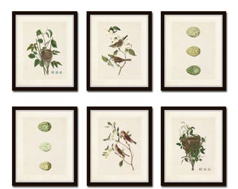 Vintage Aviary Print Set No. 5, Vintage Bird Prints, Giclee, Audubon Prints, Bird Nest Print, Bird Egg Prints, Art Print, Wall Art