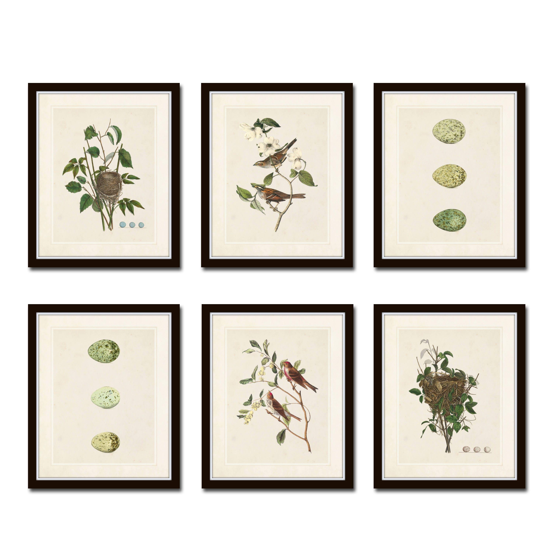 vintage aviary print set no 5 vintage bird prints giclee