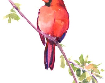 Red Cardinal , 12 X 9 in, riginal watercolor painting, red bird wall art