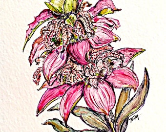 Spotted Bee Balm, Texas Wildflower Series 1, #6, original watercolor painting