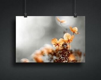 Hydrangea Art Print, Dried Hydrangea Photography Print, Home Decor Wall Art, Fall Decor, Minimalist Art Print