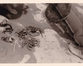 Catch Of The Day - Crabs, Sea Creatures On Beach, Vernacular Snapshot Photo