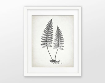 Antique Botanical Print - Fern Plant Illustration - Woodland Fern - Fern Botanical Print - Drawing - Single Print #2103 - INSTANT DOWNLOAD