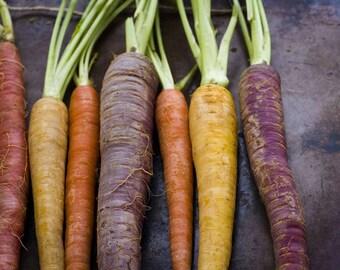 Mixed Carrots (Daucus carota) - Organic Vegetable Seeds 2 Grams