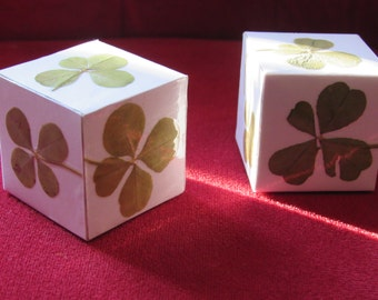 a decorative cube with 6 real 4-leaf clovers!