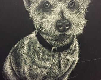Custom Scratchboard Pet Portrait