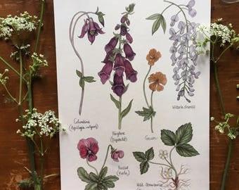 Original May Flower Study - watercolour painting