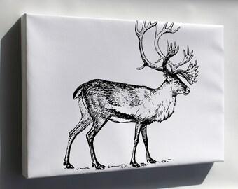 Canvas 16x24; Caribou Illustration