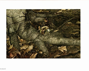 Large print Spring Beauty painted by Andrew Wyeth. The page is approx. 16 1/2 inches wide and 13 inches tall.