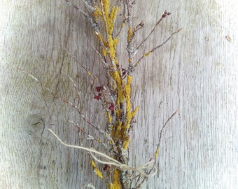Yellow mossy twigs, twigs decor, vase filler, rustic eco friendly natural decor