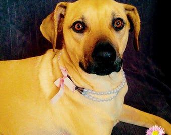 Dog Collar,Pearl Collar, Dog necklace, Pet Collar,Pearl Necklace