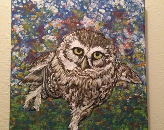 Dancing Burrowing Owl