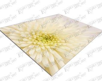 Print on Canvas white Chrysanthemum X1377