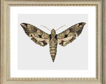 Moth Cross Stitch Pattern Butterfly Instant Download Entomology Gift Insect Cross Stitch Bug Embroidery Pastel Color Pattern Moth Embroidery