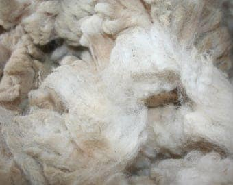Cheviot raw fleece 2.5 kg/5.51lb