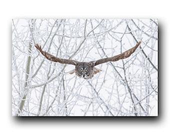 Owl in Flight, Owl Photo, Owl Print,  Snowy Owl, Bird Picture, Bird Photography, Wall Art, Snow Angel, Winter Owl, Owl In Flight, Cold Owl