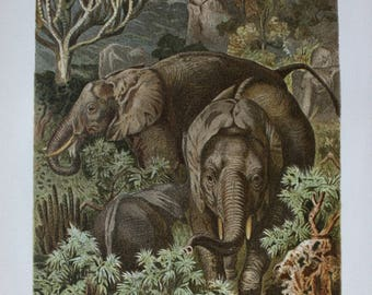 antique litho print elephant 1895