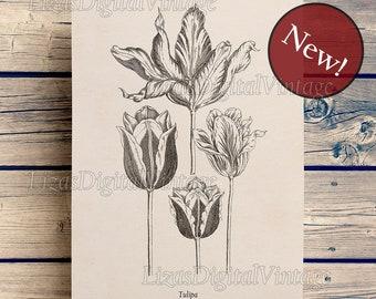 Tulip print, Flower print vintage, Tulip clipart, Tulip art, Antique botanical illustration, Flower digital download, 8x10, 11x14 wall art