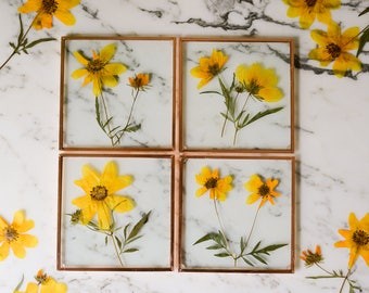 Set of 4 Pressed Flower Coasters, Tickseed Sunflower (glass and copper)