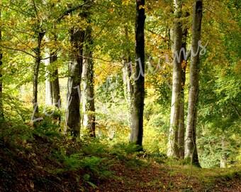 Early Autumn Sunshine, Digital Download