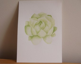 Watercolour Succulent Painting