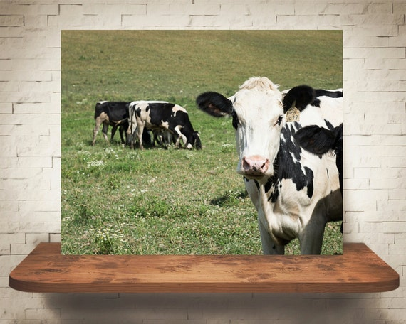 Cow Photograph - Fine Art Print - Home Wall Decor - Farm House Decor - Animal Pictures - Cows - House Warming Gifts - Wall Hanging - Country