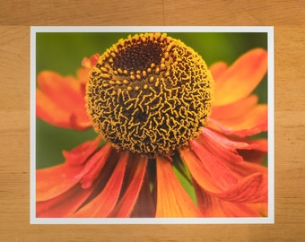 Photo Print of Orange Bee Balm Flower from DebSladekPhotography