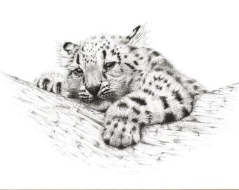 FINE ART PRINT // Snow Leopard Cub // Limited Edition // Artwork // Realism // Pen and Ink // Wildlife Art // Black and White // Drawing