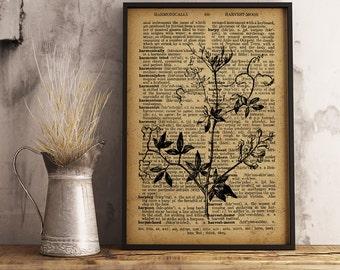 Dictionary Art Print, Botanical Art Decor, Climbing Corydalis Illustration, Climbing Corydalis Dictionary Print, Nature Art print, (F08)