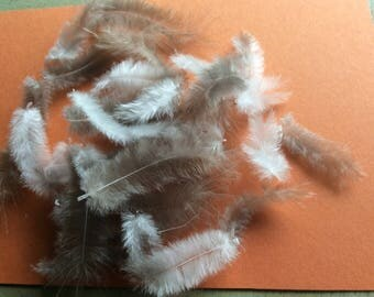 "25 x Small fluffy feathers approx 1""-2"" long ideal for craft, cards, scrap booking or the dolls house"