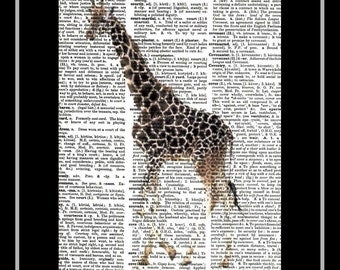 310 Giraffe Vintage Print Picture