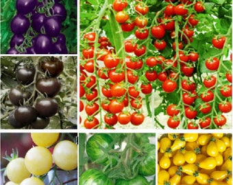 5 kinds Tomato seeds, 10 pieces for each kind, Total 50 seeds