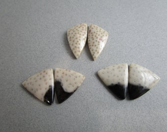 Fossil Palmwood Pairs of Cabochons / Fossilized Wood Cabs / Choice of 2 Pairs Black and Tan