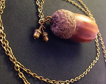 Nut Genuine acorn chain bronze