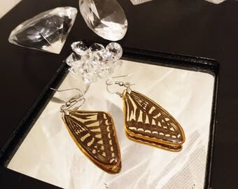 Butterfly earrings, butterfly wings, butterfly dangle earrings, real butterfly wing, full butterfly wing