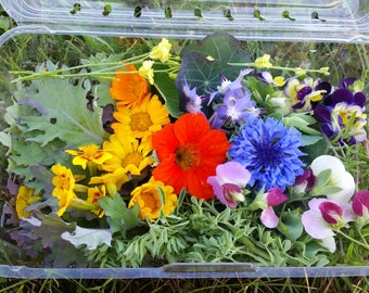Edible Flower Seed Collection