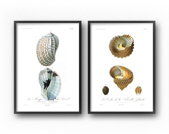 Seashell Art, Coastal Decor, Seashells, Vintage, Illustration, Coastal Wall Art, Nautical, Wall Art Set, Art Prints, Printable Art, Diptych