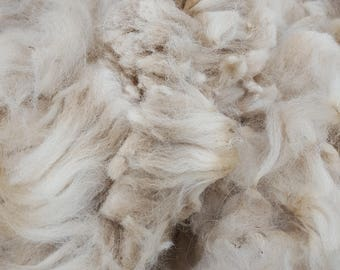 Dutch - Raw ALPACA Fleece