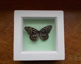 Beautiful real framed butterfly