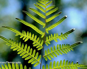 Fern Leaf Photograph | Nature Photography | Digital Download