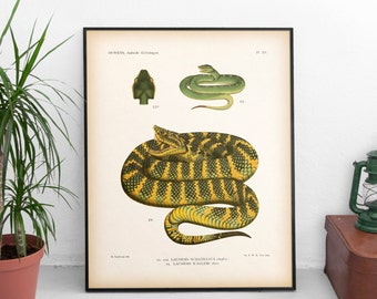 Snake print, Reptile print, Snake art, Vintage illustration, Digital download print, Wall art, Antique animal print, 8x10, 11x14 print, JPG