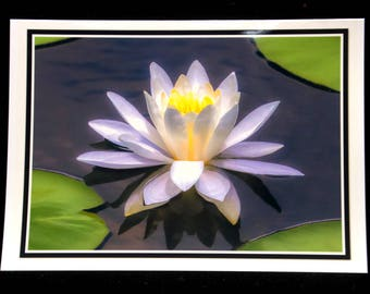 A Water-Lily At The Wakeena Nature Preserve 5x7 Blank Card By ThomasMinutoloPhotos