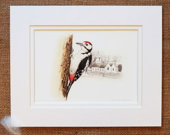 Greater Spotted Woodpecker Print, St. Andrews Church, Guernsey.