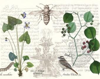 Violet botanical printable, botanical illustration, antique botanical prints, insect art, vintage botanical print, botanical poster