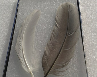 Glass frame feathers