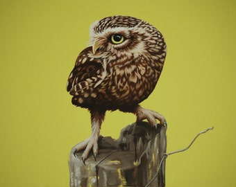 Original Bird Painting, Little Owl (2014)