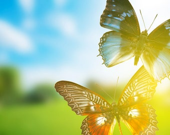 Backlight of butterflies with strong colors creating warm atmosphere, Photo-art to decorate