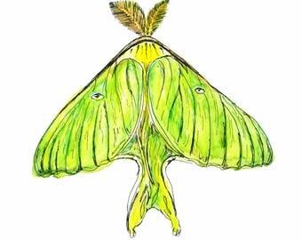 Luna moth, art prints, wall art, watercolor art, science art, science illustration, moth art